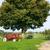 赤 · トラクター · 草地 · 作業 · 風景 · 地球 - ストックフォト © ivonnewierink