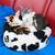 современных · сиамские · кошки · черепахи - Сток-фото © ivonnewierink