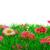grama · artificial · flores · pedra · primeiro · plano · fora · foco - foto stock © ivonnewierink