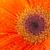 gocce · d'acqua · cuore · arancione · isolato · gocce - foto d'archivio © ivonnewierink