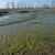 болото · трава · отражение · Швеция · солнечный · свет - Сток-фото © ivonnewierink