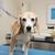 veterinário · bigle · posando · cão · mulher - foto stock © ivonnewierink