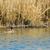 pássaro · pena · ver · mergulho · fotografia - foto stock © ivonnewierink
