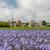 Церкви · голландский · острове · белый · мало · небольшой - Сток-фото © ivonnewierink