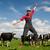 gelukkig · landbouwer · veld · koeien · jonge · springen - stockfoto © ivonnewierink