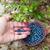 szőlőszüret · áfonya · áfonya · bokor · étel · kéz - stock fotó © ivonnewierink