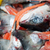 heads of salmon fishes stock photo © ivonnewierink
