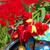 bicikli · tulipánok · részlet · holland · mezők · virágok - stock fotó © ivonnewierink