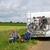 rolnictwa · krajobraz · Holland · kukurydza · moc - zdjęcia stock © ivonnewierink