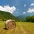 búzamező · hegyek · Franciaország · természet · szépség · nyár - stock fotó © ivonnewierink