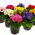 kolorowy · wiele · ogród · narzędzia · odizolowany · biały - zdjęcia stock © ivonnewierink