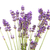 bouquet lavender stock photo © ivonnewierink