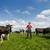 gazda · mező · tehenek · fiatal · büszke · zöld - stock fotó © ivonnewierink