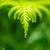chuva · gotas · verde · água - foto stock © ivonnewierink