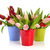 colorful tulips in buckets stock photo © ivonnewierink