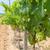 wijngaard · landschap · Frankrijk · huizen · horizon · hemel - stockfoto © ivonnewierink