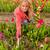 букет · красочный · голландский · тюльпаны · белый - Сток-фото © ivonnewierink