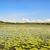 água · lírios · lago · folha · jardim - foto stock © ivonnewierink