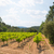 Landschaft · Bild · Südafrika · Obst · Regen · grünen - stock foto © ivonnewierink