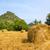 hooi · landschap · frans · hemel · zomer · veld - stockfoto © ivonnewierink
