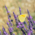 kelebek · görüntü · makro · çiçekler · doğa · hayvan - stok fotoğraf © ivonnewierink