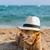 köpek · gömülü · kum · jack · russell · plaj · yaz · tatili - stok fotoğraf © ivonnewierink