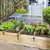 vegetal · jardim · rural · inglaterra · verão · primavera - foto stock © ivonnewierink