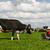 agricoltore · laptop · pagliaio · computer · istruzione · farm - foto d'archivio © ivonnewierink