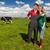 типичный · голландский · природы · коров · воды · деревья - Сток-фото © ivonnewierink