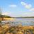 tájkép · mocsár · természet · fák · fa - stock fotó © ivonnewierink