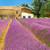 lavanda · cesta · flores - foto stock © ivonnewierink