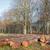 cięcia · drzew · lasu · tekstury - zdjęcia stock © ivonnewierink