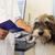 köpek · okuma · kitap · fotoğrafçılık · beyaz · arka · plan · memeli - stok fotoğraf © ivonnewierink