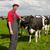 rolnik · dziedzinie · krów · młodych · zielone · mleka - zdjęcia stock © ivonnewierink