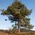árvore · furacão · vento · catástrofe · quebrado · raízes - foto stock © ivonnewierink