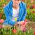 hollanda · çiçek · alanları · sarı · lâle · alan - stok fotoğraf © ivonnewierink