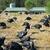 muitos · fazenda · ao · ar · livre · edifício · grupo · animais - foto stock © ivonnewierink
