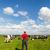 typowy · holenderski · krajobraz · rolnik · krów · czarno · białe - zdjęcia stock © ivonnewierink