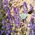 borboleta · recentemente · natureza · fazenda · etapa - foto stock © ivonnewierink