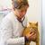 vermelho · gato · veterinário · médico · veterinário · clínica - foto stock © ivonnewierink