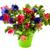 bouquet anemones stock photo © ivonnewierink