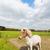 cavalo · branco · cruzes · lagoa · água · natureza · cabelo - foto stock © ivonnewierink