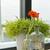 оранжевый · Daisy · аннотация · макроса · капли · воды · лепестков - Сток-фото © ivonnewierink