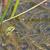 カエル · 頭 · 外に · 後ろ · 葉 - ストックフォト © ivonnewierink