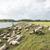 オランダ語 · 羊 · 島 · 雲 · 草 · 緑 - ストックフォト © ivonnewierink