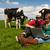 campo · vacche · farm · laptop - foto d'archivio © ivonnewierink