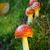 гриб · красный · белый · лет · природы · лес - Сток-фото © ivonnewierink
