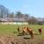 rebanho · vacas · França · natureza · prado · fora - foto stock © ivonnewierink
