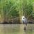 great blue heron stock photo © ivonnewierink