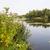 water landscape in holland stock photo © ivonnewierink